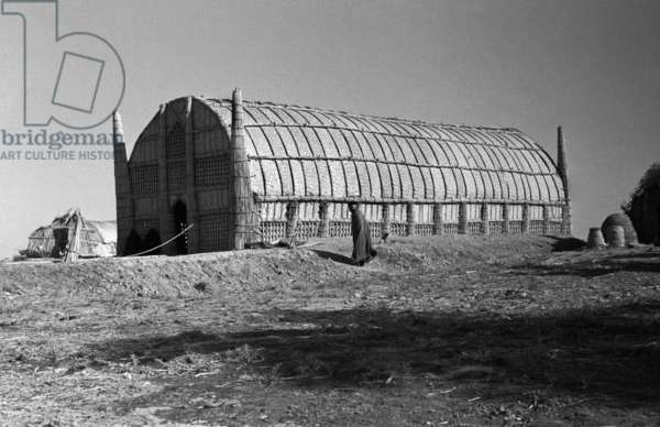 Exterior view of a mudhif or guest house, Abra, Iraq, 1956 (b/w photo)