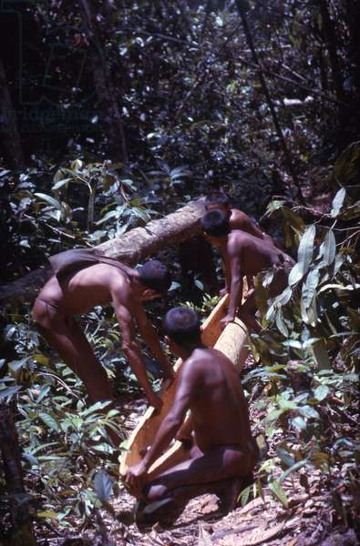 Makuna men making a canoe, Vaupes department, Colombia, 1960-61 (photo)