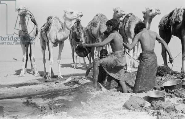 View of Wilfred Thesiger's travelling party at a well in Al Batin sands during their journey across the Empty Quarter (Rub' al Khali) from Al Dhafra sands to Liwa oasis, United Arab Emirates, March 1-5, 1948 (b/w photo)
