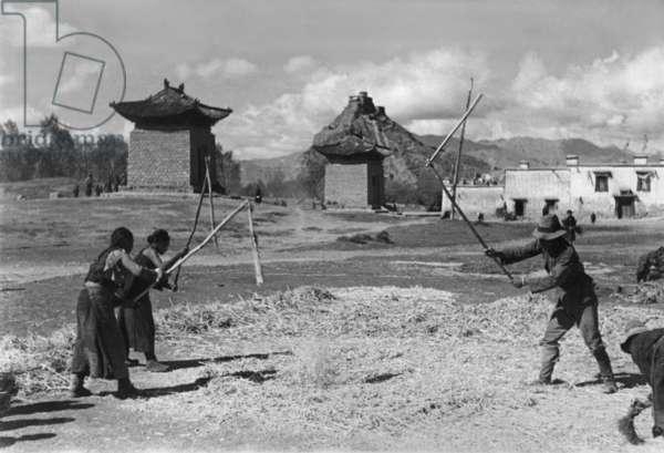 Flailing barley, Chakpori, Lhasa, Tibet, 6th October 1936 (gelatin silver print)