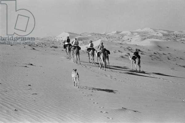 View of Sheikh Zayed bin Sultan Al Nahyan's hawking party riding in Al Khatam sands near Al Ain, United Arab Emirates, December 20, 1948 – January 27, 1949 (b/w photo)
