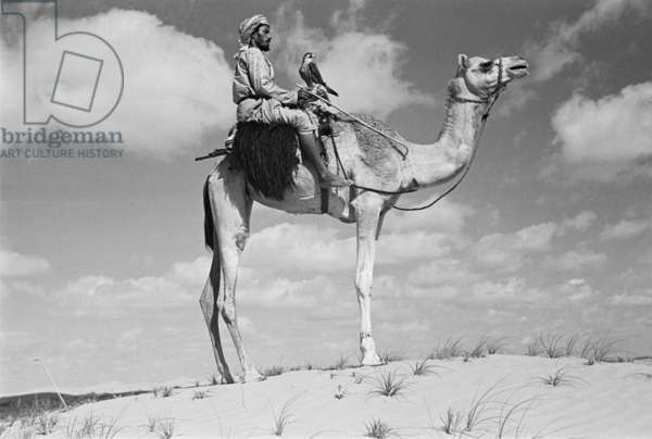 Profile portrait of an Arab falconer, a member of Sheikh Zayed bin Sultan Al Nahyan's hunting party, riding a camel with a peregrine falcon in Al Khatam sands near Al Ain, United Arab Emirates, December 20, 1948 – January 27, 1949 (b/w photo)