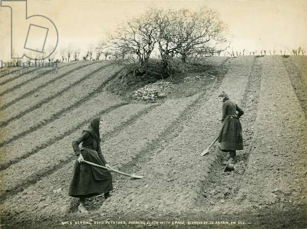 Girls setting seed potatoes, breaking clods with spade, c.1890s (b/w photo)