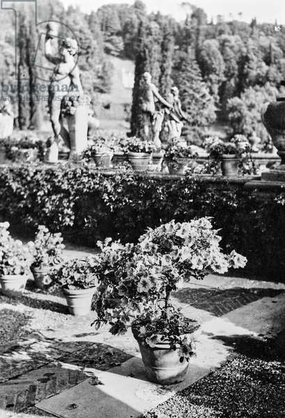 Detail of the garden of Villa Palmieri in Florence, Florence, Italy, 1920-1930