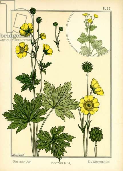 The Buttercup (colour litho)