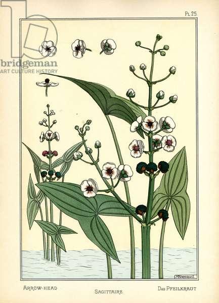 The Arrowhead (colour litho)