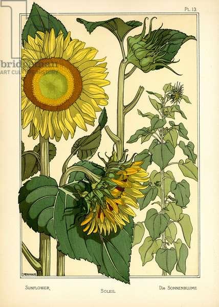 The Sunflower (colour litho)