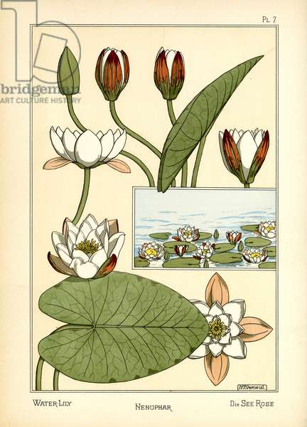 The Water Lily (colour litho)