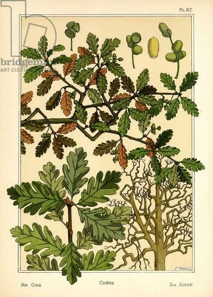 The Oak (colour litho)