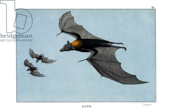 Vampire, 1860 (colour litho)
