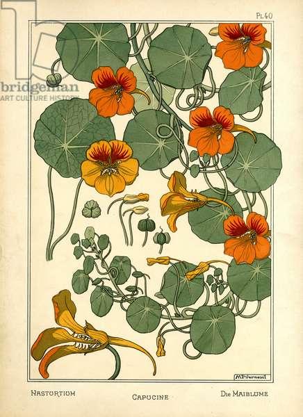 The Nasturtium (colour litho)
