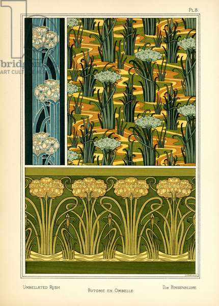 The Umbellated Rush (colour litho)