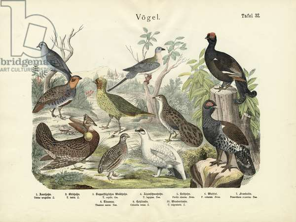 Birds, c.1860 (colour litho)