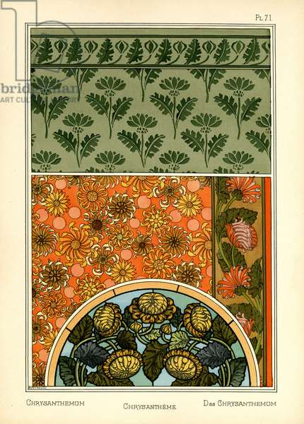 The Chrysanthemum (colour litho)