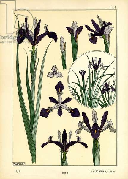 The Iris (colour litho)