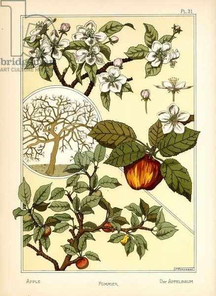 The Apple Tree (colour litho)