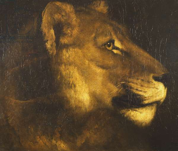 Head of a Lioness (oil on canvas)