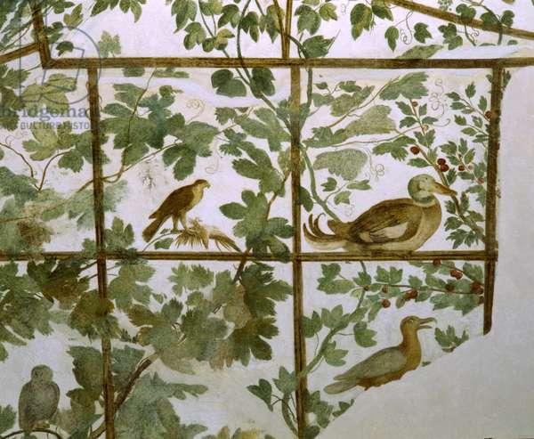 Fresco of an Aviary in the Villa Medici, c.1576-77 (fresco)