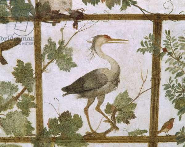 Ibis, from a Fresco of an Aviary in the Villa Medici, c.1576-77 (fresco)