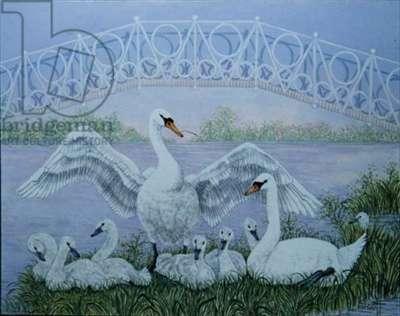 The Family Swan (acrylic)