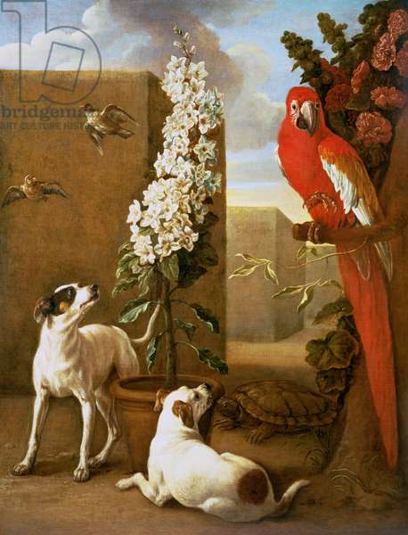 Parrot with Dogs