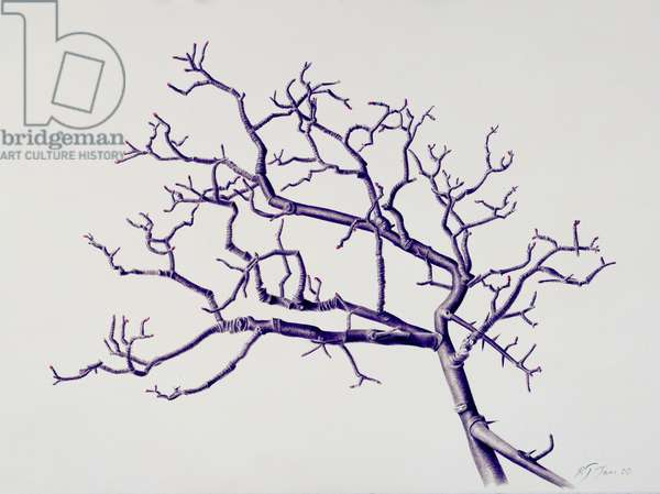 Old Hawthorn, 2000 (w/c over pencil on paper)