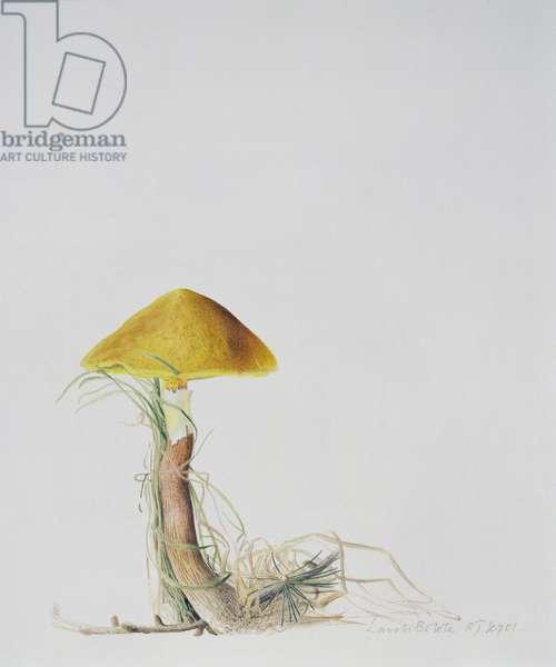 Larch Bolete, 2001 (w/c over pencil on paper)