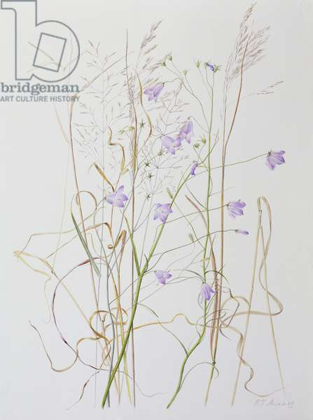 Harebells in Grass, 2003 (w/c over pencil on paper)