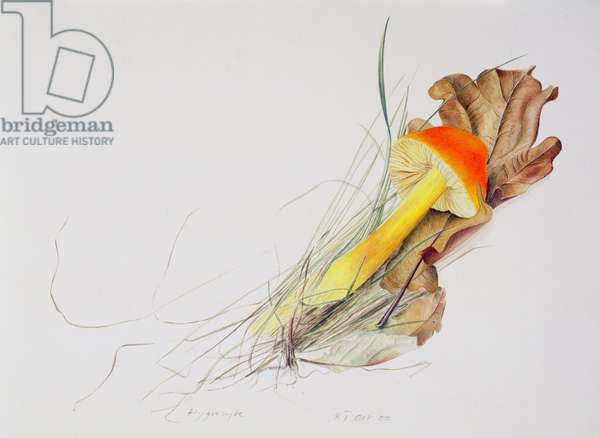 Hygrocybe, 2000 (w/c over pencil on paper)