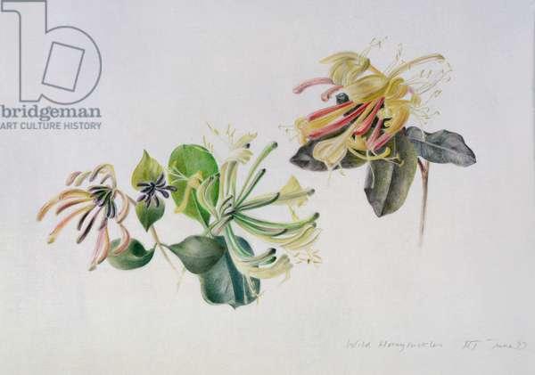 Wild Honeysuckles, 1999 (vellum)