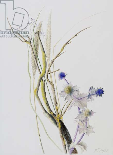 From the Dunes (Sea Holly, Gorse, Grass, Reed, Sea Lavender), 1999 (w/c over pencil on paper)