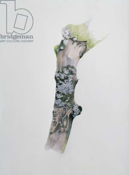 Fallen Branch, 1997 (w/c over pencil on paper)