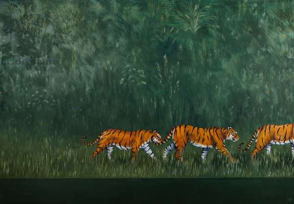 A streak of Tigers