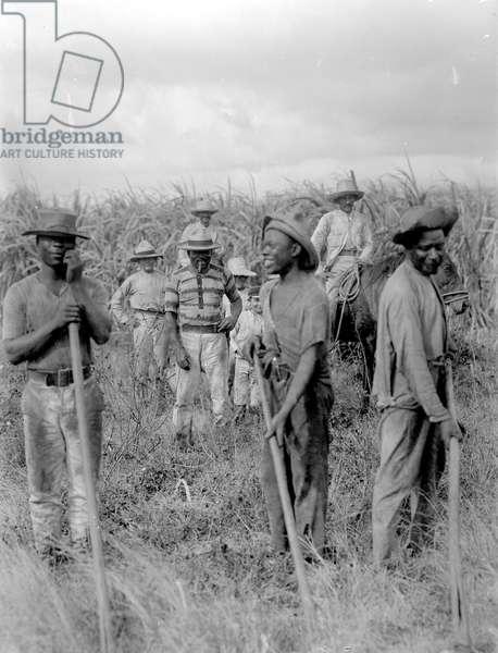 Workers in a sugar plantation, Cuba, 1908-09 (b/ photo)