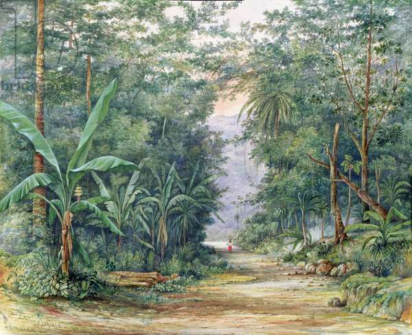 T1229 The Blue Mountains, Jamaica, 1879 (w/c)
