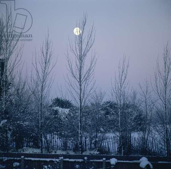 Twilight (photo)