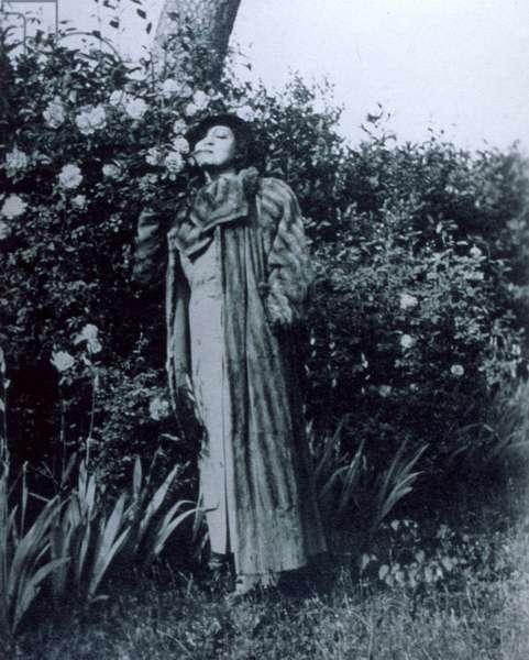 Rosa Ponselle in gardens