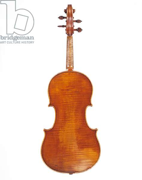 Viola 'Archinto' by Antonio