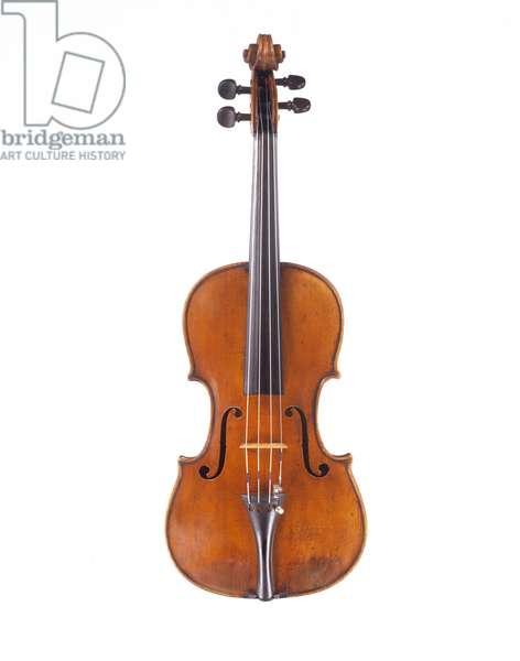 Viola by Landolfi (15