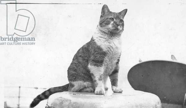 Ship's Cat on HMS Hood, c.1937 (b/w photo)
