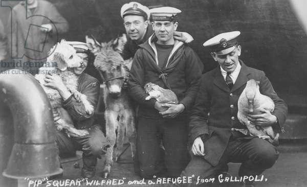Ship's Pets on HMS Centurion, c.1915 (b/w photo)