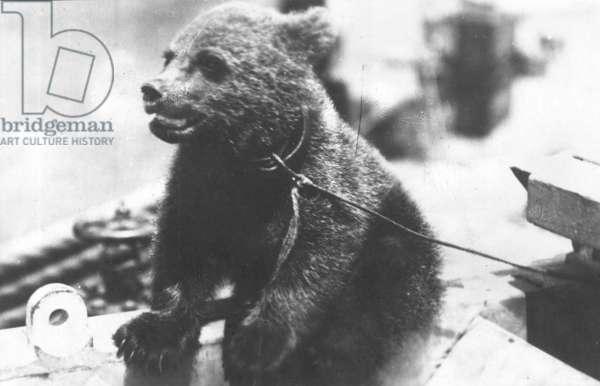 Bear Cub on HMS Ajax (b/w photo)