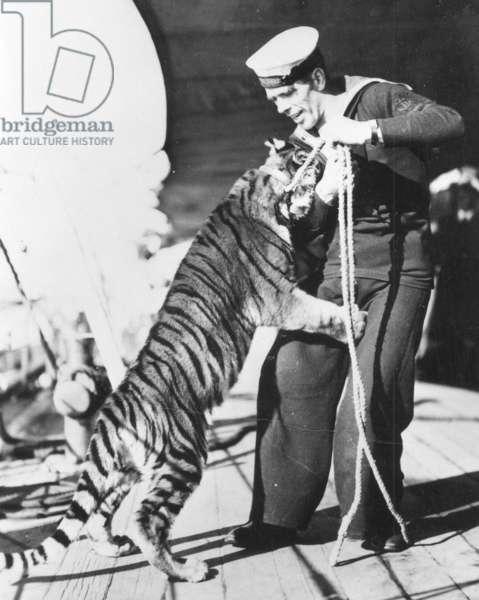 Tiger Cub on HMS Kent, c.1930 (b/w photo)
