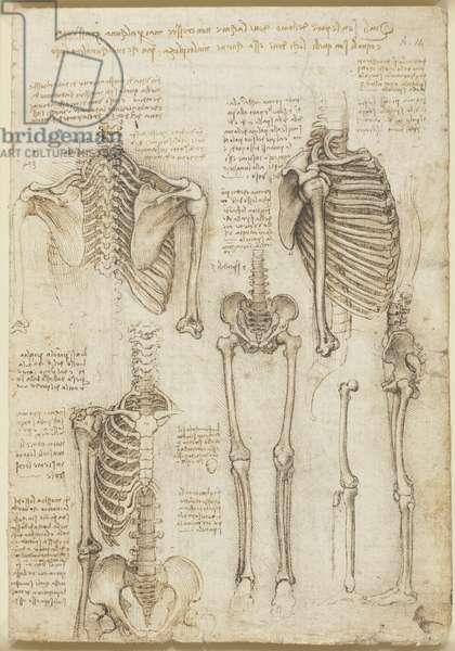 The skeleton, c.1510-11 (chalk, pen & ink on paper)