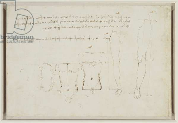 Verso: Studies of human proportion, c.1490 (pen & ink on paper) (verso of 3823040)