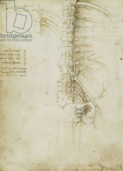 Verso: The veins of the pelvic and lumbar region, c.1508 (pen and ink over black chalk on paper)