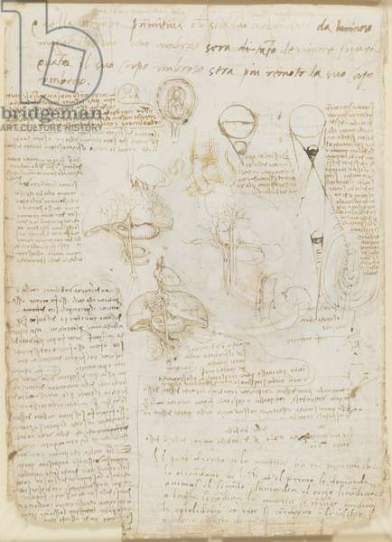 Verso: Notes on reproduction, with sketches of a fetus in utero, etc., c.1511 (pen & ink on paper)