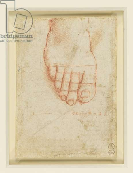Recto: A right foot with lines of proportion, c.1493-94 (chalk on paper)