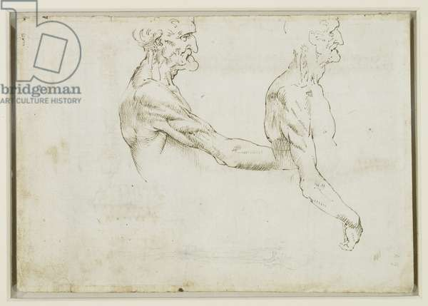 The surface anatomy of the shoulder and arm, c.1510 (pen & ink with black chalk on paper)