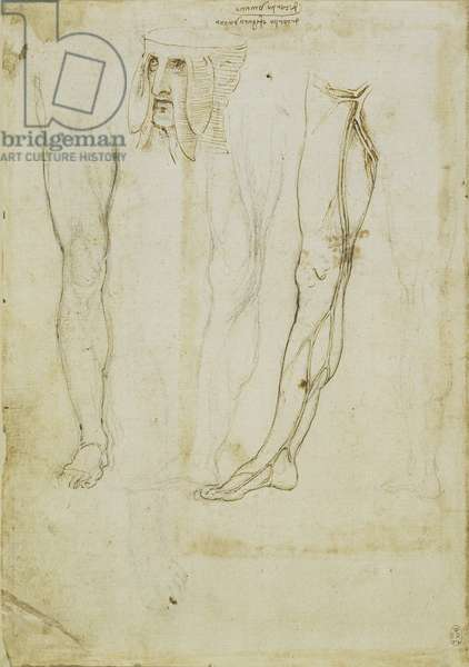 The vessels of the leg, and a monstrous head, c.1508-10 (pen & ink and chalk on paper) (recto of 5455482)